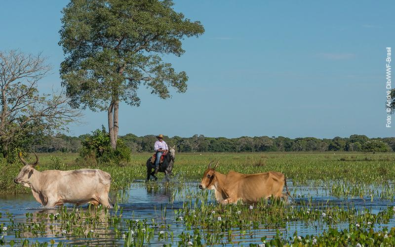 Boviplan e WWF lançam programa de apoio à produção sustentável no Pantanal
