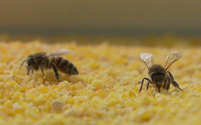 Abelhas no cocho – Como solucionar de forma sustentável?